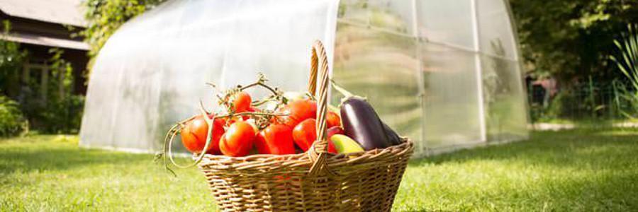 Качественная теплица - хороший урожай